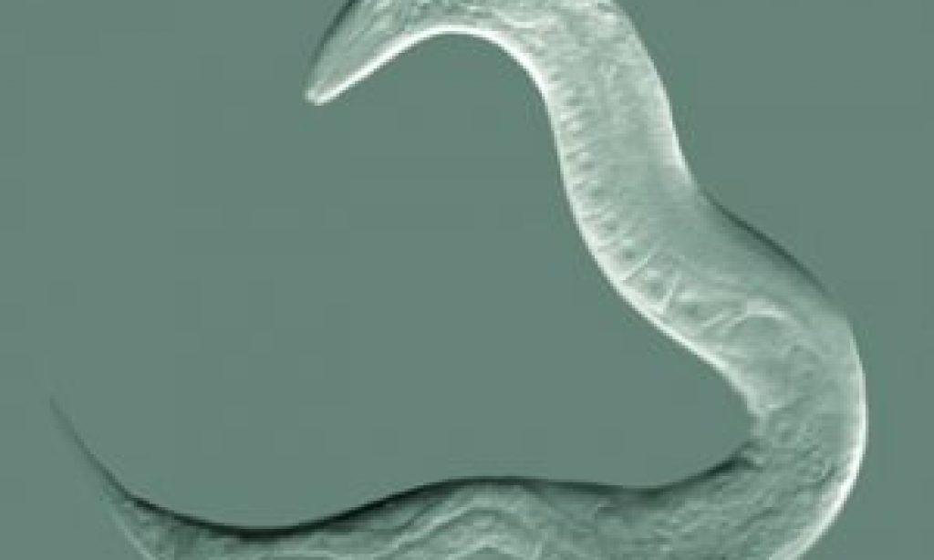 La composición de la microbiota intestinal podría ayudar a ralentizar el proceso de envejecimiento